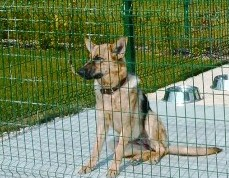 Animal Shelter Fencing